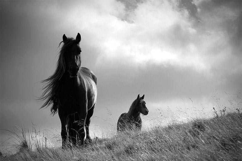 Horse photo equine art animal photography black and white