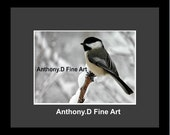 "Original ACEO Photograph / Artist PRINT / ""Chickadee Pause"" farm Landscape By Anthony D"
