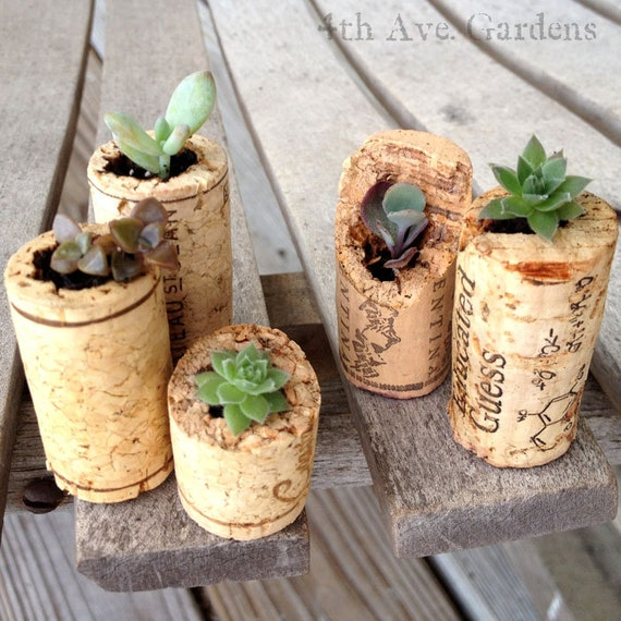 A Cork Garden Band of Five Succulents - The M-Dons
