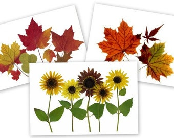 set of 6 pressed flower cards - Autumn Leaves and Sunflowers - #076