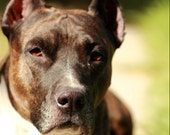 "My dog - Fine art photography - Print (20x30 cm) 8""x12"" - Brown, green, white, black - Animal - Modern wall decor"