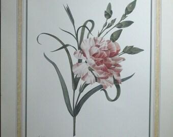2 P.J. REDOUTE' Botanical Garden Prints, ROSE and Anemone, Clematide, Panache  - originals 1833
