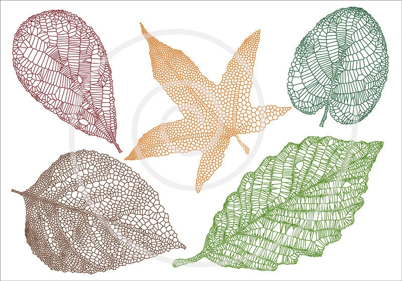 Skeleton Leaf Silhouette