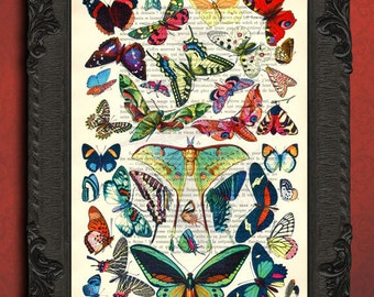 Collection of butterflies butterfly chart french dictionary page upcycled book dictionary print butterfly specimen wall art