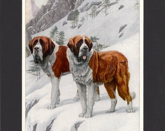 St Bernards 1919  Vintage Dog Print by Louis Agassiz Fuertes Print of Signed Painting Mounted with Mat St Bernard Print