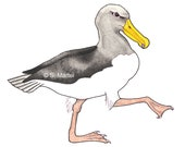 Albatross, bird cards, bird greeting cards, seabird note cards all occasion, blank, whimsical, endangered species, Chatham albatross