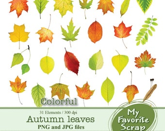 Digital Clipart Autumn Leaves Colorful (31 separate digital graphics) Set for Personal and Commercial Use Paper Crafts Digital Graphics