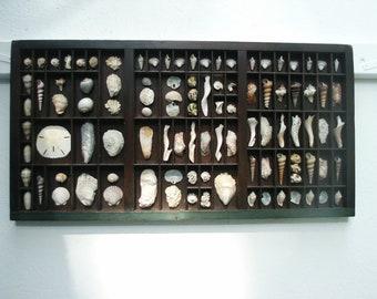 Seashell Antique Type Tray
