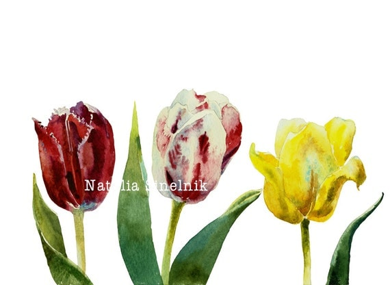 Three tulips digital download original watercolor in red, white, yellow and green colors, cottage chic style painting