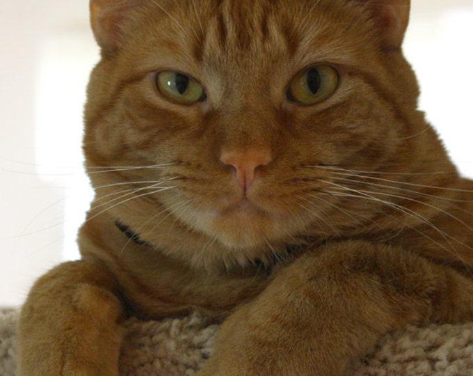 Orange Tabby Cat Photograph Fine Art Print