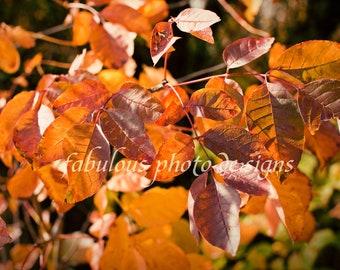 8x10 Orange Fall Leaves Fine Art Photograph - Nature Landscape Photography - Family Home Decor