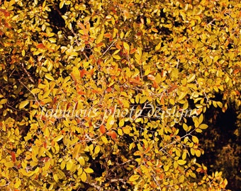 8x10 Yellow Fall Leaves Fine Art Photograph - Nature Landscape Photography - Family Home Decor