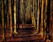 Abandoned Fine Art Photograph Forest Landscape
