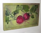 Print of Two Radishes, Mounted on Board and Ready to Hang