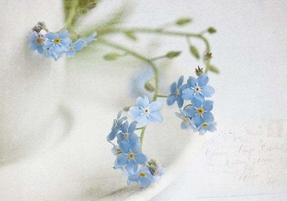 "Forget-me-not Photography, Blue Forget-me-not flowers, Fine Art Print 8x12"", spring flowers, wall decor, wall art, home decor, blue white"