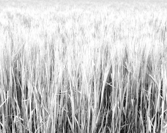 Fine Art Photograph - ''Barley