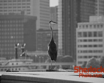 Heron with Detroit Skyline - Image 01502