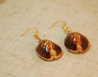 Collection seashell earrings