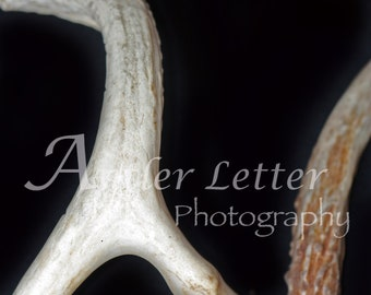 SALE-Letter N, Antler, Whitetail Buck Shed, Photography, Alphabet, Hunting