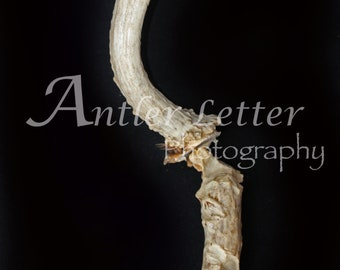 SALE-Letter S, Antler, Whitetail Buck Shed, Photography, Alphabet, Hunting