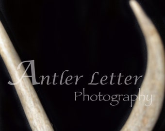 SALE-Letter V, Antler, Whitetail Buck Shed, Photography, Alphabet, Hunting