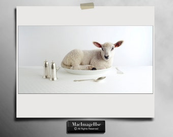 Baby Lamb Photograph , Cute Farm Animal , Little Lamb