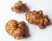 Jerusalem artichoke delicious edible live tubers