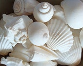 White Seashell Mix (12-15 pcs.)