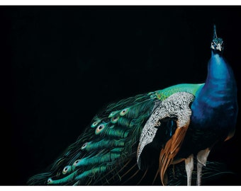 Overdressed And Underappreciated 18 x 24 Art Print - Bird - Peacock - Gift - Animal - Nature - Giclee - Limited Edition