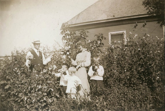 vintage photo Family Picking Flower Bouquets of Sweet Peas in the Garden 3 boys Spring or Summer