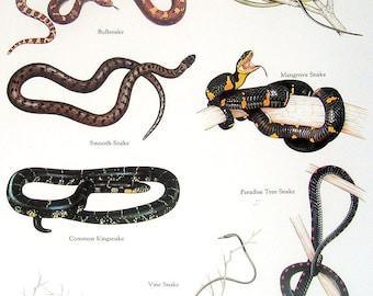 Snakes - Bullsnake, Smooth Snake, Vine Snake, Common Kingsnake - Vintage 1980s Book Plate Page