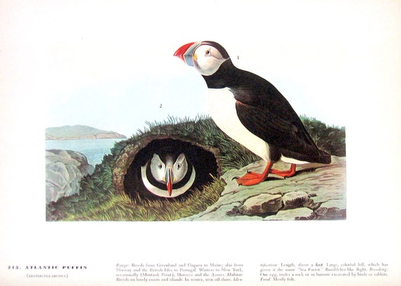 Audubon Birds - Atlantic Puffin, Razor Billed Auk - 1941 - 2 sided Book Plate with Names and Descriptions