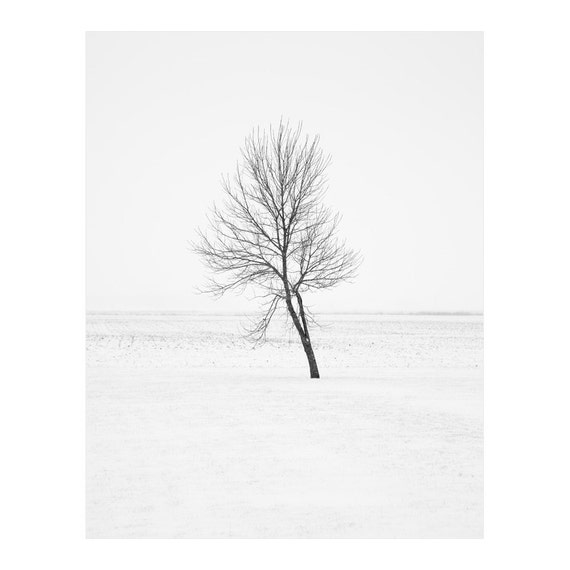 Black and White Nature Photography - Nature Prints - Black and White Tree Prints - Winter Tree Wall Art - Large Art - Rustic Cabin Decor