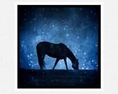 Horse Photography, midnight blue, black, Round Midnight, nature fine art photography print