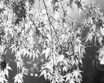 Japanese Tea Garden Portland Black and White Leaves Fine Art Photography Print on Metallic Paper