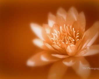 Fine Art Photography - Nature Photography - Flower Photo - Lily Print