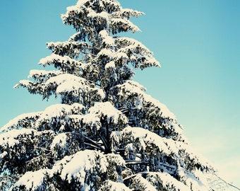 Winter photograph - Snowy Pine,   11x14 - New England photography, snow, pine tree, blue, green white, christmas