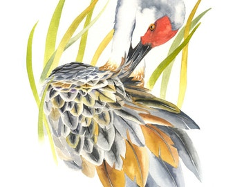 "Limited Edition GICLEE MINI Print /  ""Between the Reeds"" /  Watercolor Painting of Sandhill Crane"
