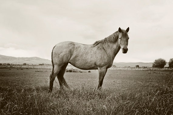 Black and White Horse Photography Standing Horse Horse