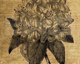 INSTANT DOWNLOAD - Vintage Rhododendron Flower Illustration - Download and Print - Image Transfer - Digital Sheet by Room29 Sheet no. 992