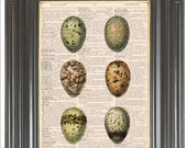 COUPON SALE Collage colorful quail egg print Dictionary page art Wall art decor Sheet music art Digital art print Bird egg print Item No 240