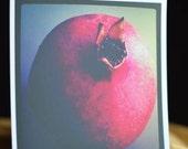 Pomegranate - Sweet Square Photo 4x4