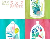 5x7 Set of three Terrarium Prints