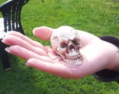 Spooky Moulded Resin Skull Halloween Decoration