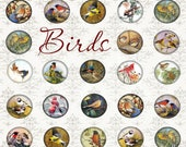 BIRDs - Digital Collage Sheet 1 inch Circles Printable Images ChikUna Art for Pendants, Magnets, round Bezels