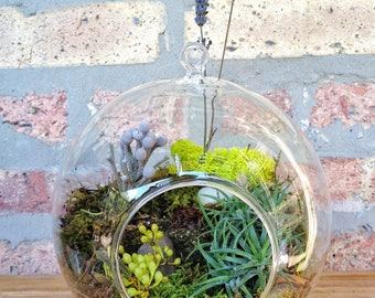 JUMBO Air Plant and Moss Terrarium - A Unique Birthday or Mothers Day Gift