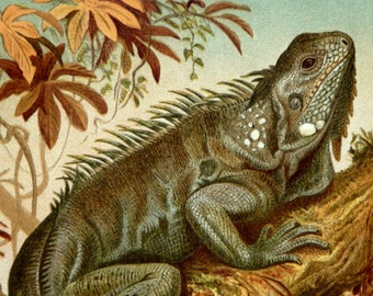 1890 IGUANA, antique fine lithograph. 126 years old gorgeous print