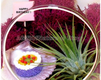 BIRTHDAY TERRARIUM - Tillandsia Air Plant Gift - Hanging Glass Orb - Purple Moss Handmade Cake Wedding Gift  Thank you Housewarming Gift