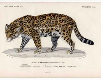 JAGUAR safari series mammal print