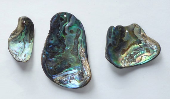 3 Paua Shell Pieces With Top Drilled Holes By